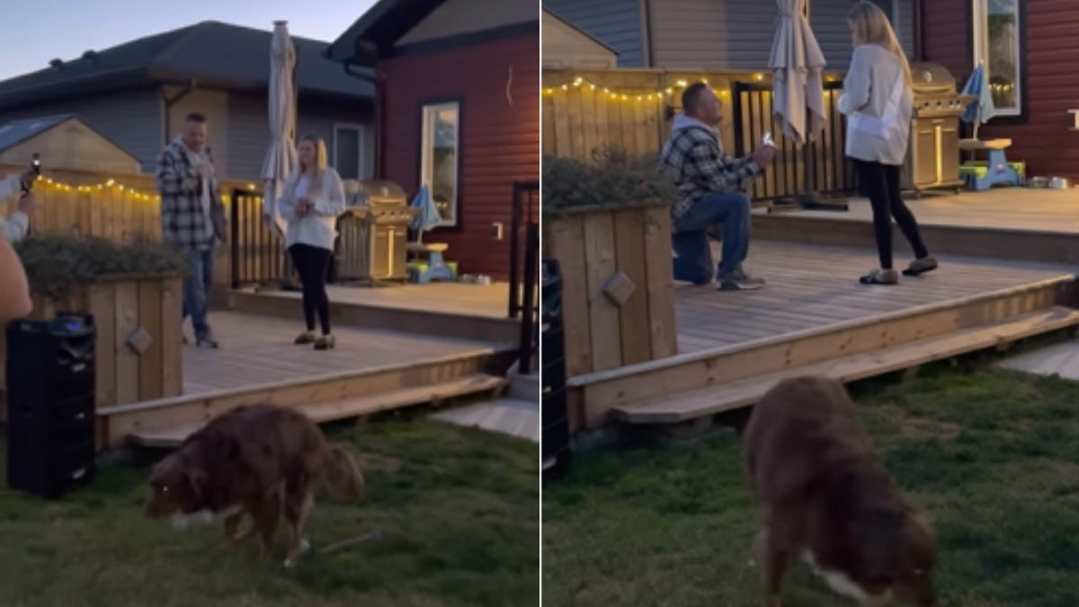 A video  of a man goes viral while proposing his girlfriends and their dogs 'potty break' takes the limelight