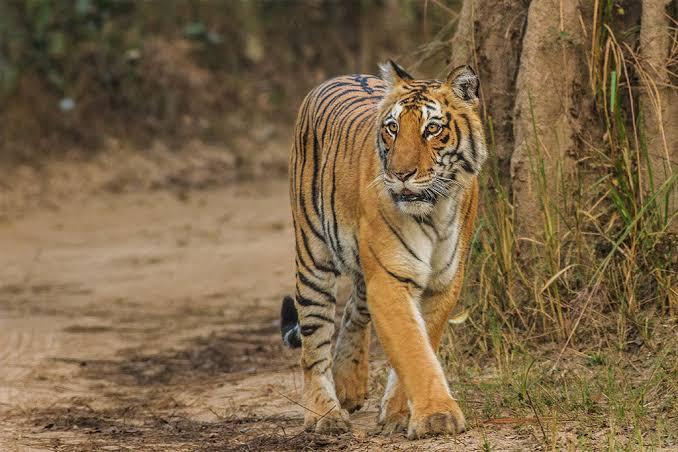 Jim Corbett National Park may be renamed as Ramganga National Park