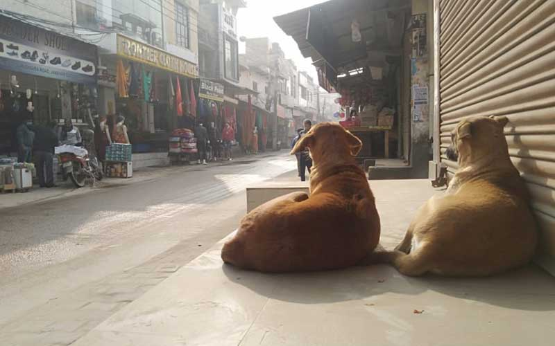 The Delhi High Court ruled that stray dogs have the right to food and residents have the right to feed