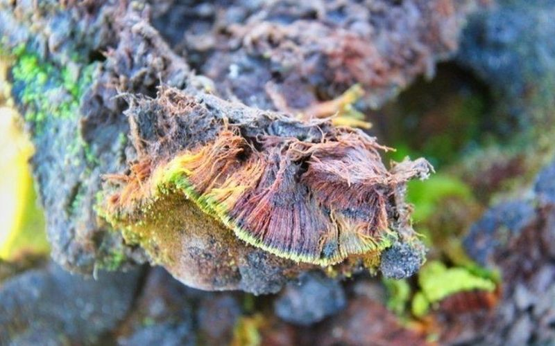 Indian scientists uncover a new species of plant in Antarctica